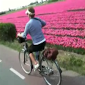 Spring tulips bike tour video