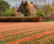 Keukenhof flower garden bike tour